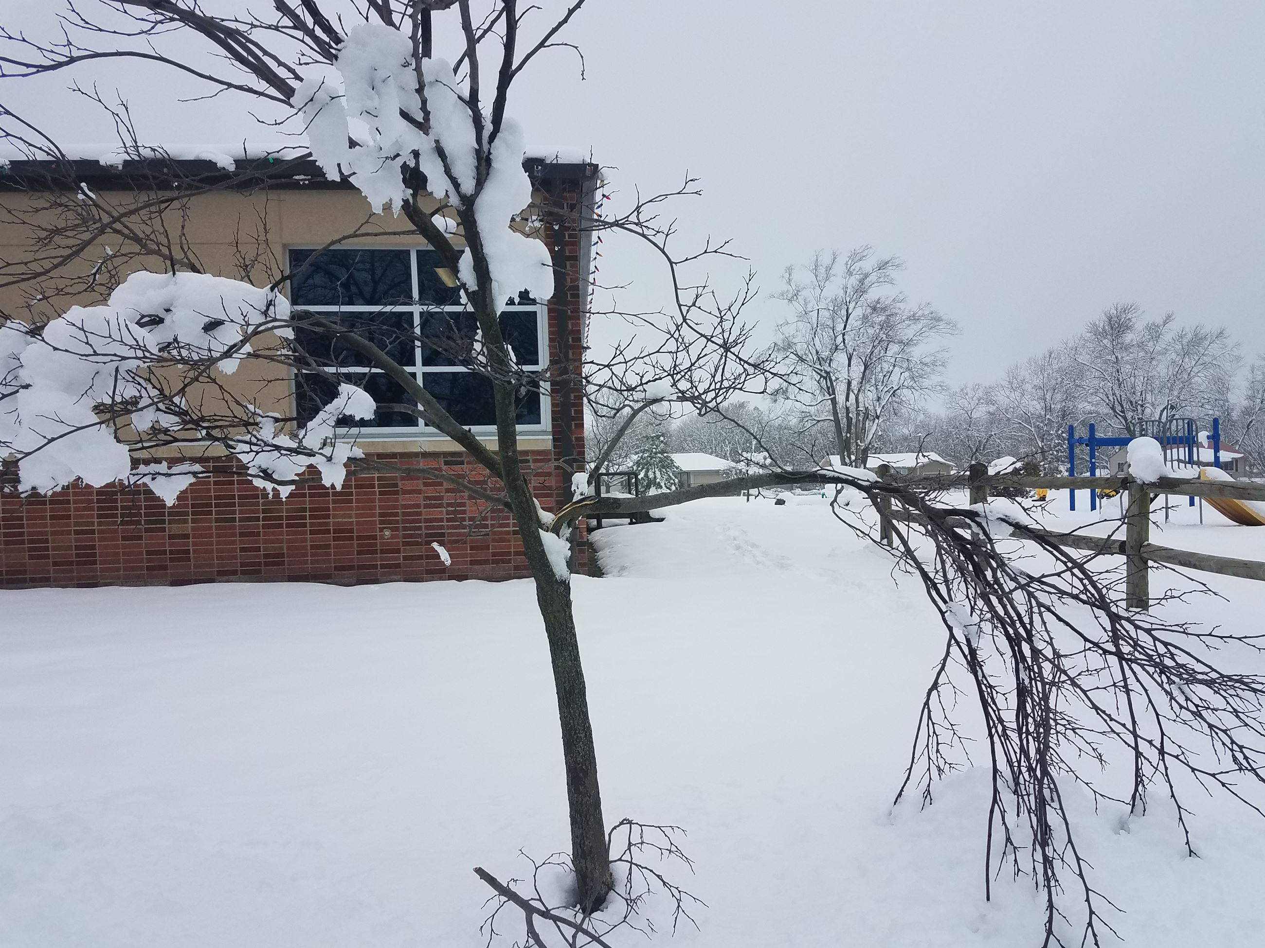 A small tree is snapped after a recent heavy snowfall near City Hall and Friendship Park