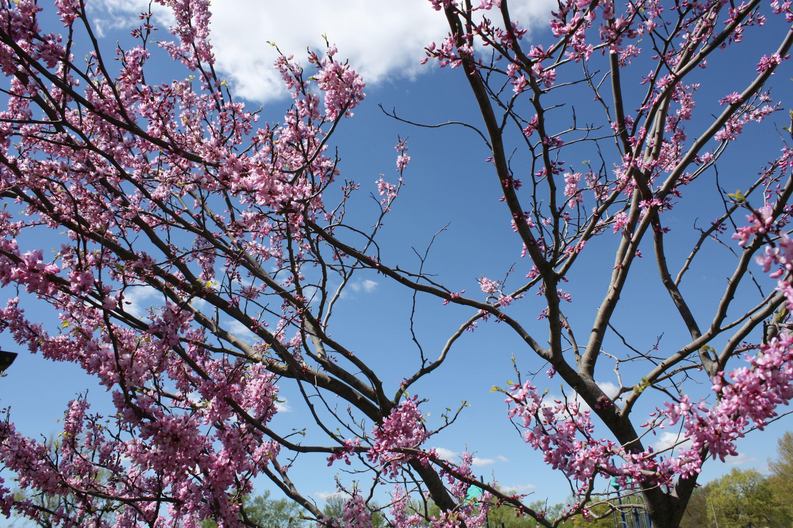 Spring Hill, KS - Official Website   Official Website